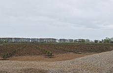 Gilan agro-citrus farm